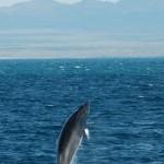 1 Minke Whale