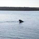 9 Pilot Whales 7