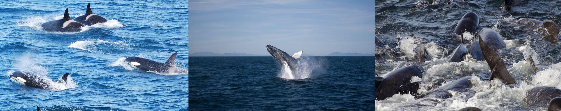 Header-Whale-watching-